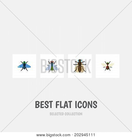 Flat Icon Fly Set Of Dung, Fly, Mosquito And Other Vector Objects