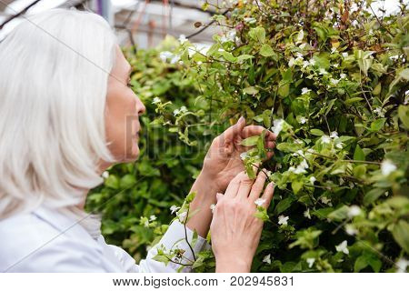 Side view of mature beautiful woman working and looking at plants in greenhouse