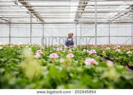 Young concentrated mature blonde woman in apron working with flowers in greenhouse