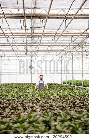 Young serious man gardener standing in greenhouse between plants