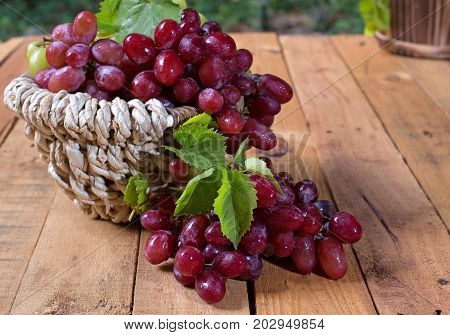 Basket of red grapes on a wooden surface