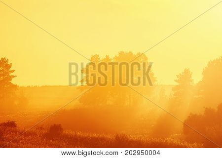 landscape with Golden rays of the setting sun pierces through the forest