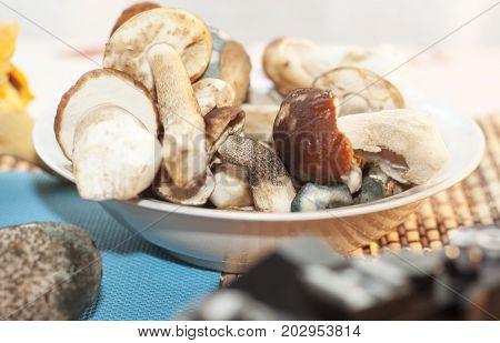 Gathering mushrooms. Leccinum mushroom mushroom photo forest photo forest mushroom forest mushroom photo poster