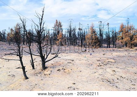 Charcoaled landscape including a burnt forest surrounded by a field of ash caused from a wildfire taken in the San Bernardino Mountains, CA
