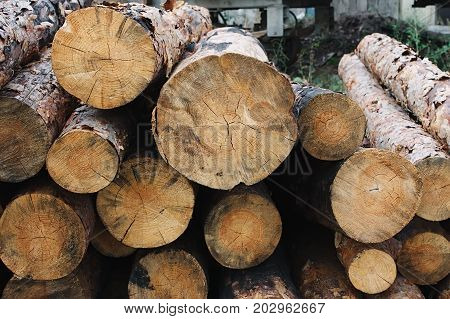 Background Of Dry Chopped Firewood Logs Stacked Up On Top Of Each Other In A Pile. Cut Log Wood
