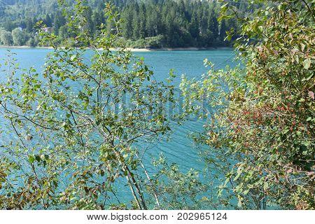 nature in barcis lake - Pordenone - italy