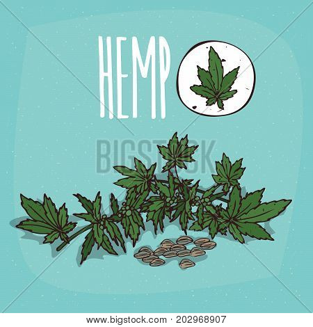 Set of isolated plant Hemp leaves herb with seeds Simple round icon of Cannabis sativa on white background Lettering inscription Hemp