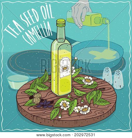 Glass bottle of Tea seed oil and Camellia oleifera plant. Hand pouring oil on frying pan. Natural vegetable oil used for frying food