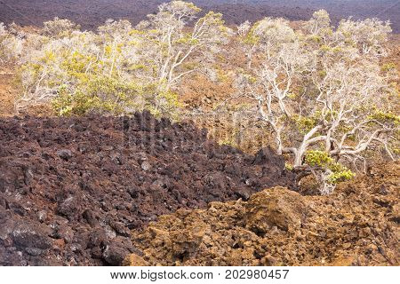 plants growing on the lava at kilauea national park