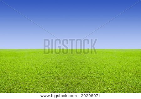 Green level field and a blue cloudless sky