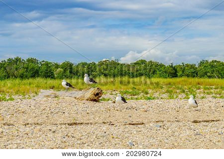 Sea Gulls on the Orient beach, Long Island NY, US