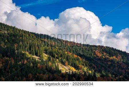 cloud on a blue sky over the forest on hill. beautiful nature background with mixed forest textures in autumn