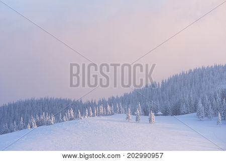 Christmas landscape with fir trees in the snow. Winter in the mountains. Beautiful sunset with red clouds. Fabulous views in the wild