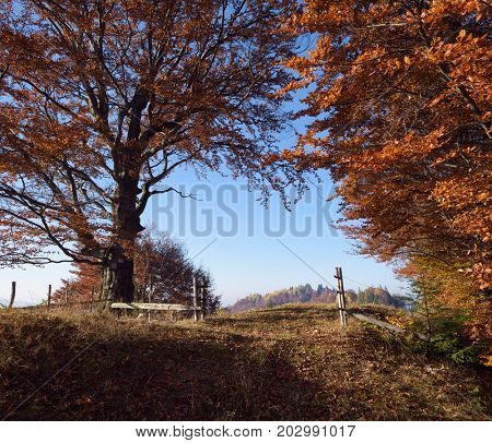 Autumn landscape in countryside. Wooden fence and gates. Road in beech forest