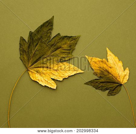 Fall Fashion Design. Autumn Art Gallery. Minimal. Fall Leaves Background. Yellow Green Maple Leaves Couple. Trendy fashion Stylish Concept. Autumn Vintage