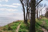 Langeland beach Dovnsklint south of Gulstav Mose with trees. The cliffs are a polular spot for birdwatching poster