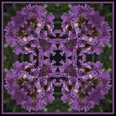 Geometric kaleidoscope design created with a purple wildflower poster