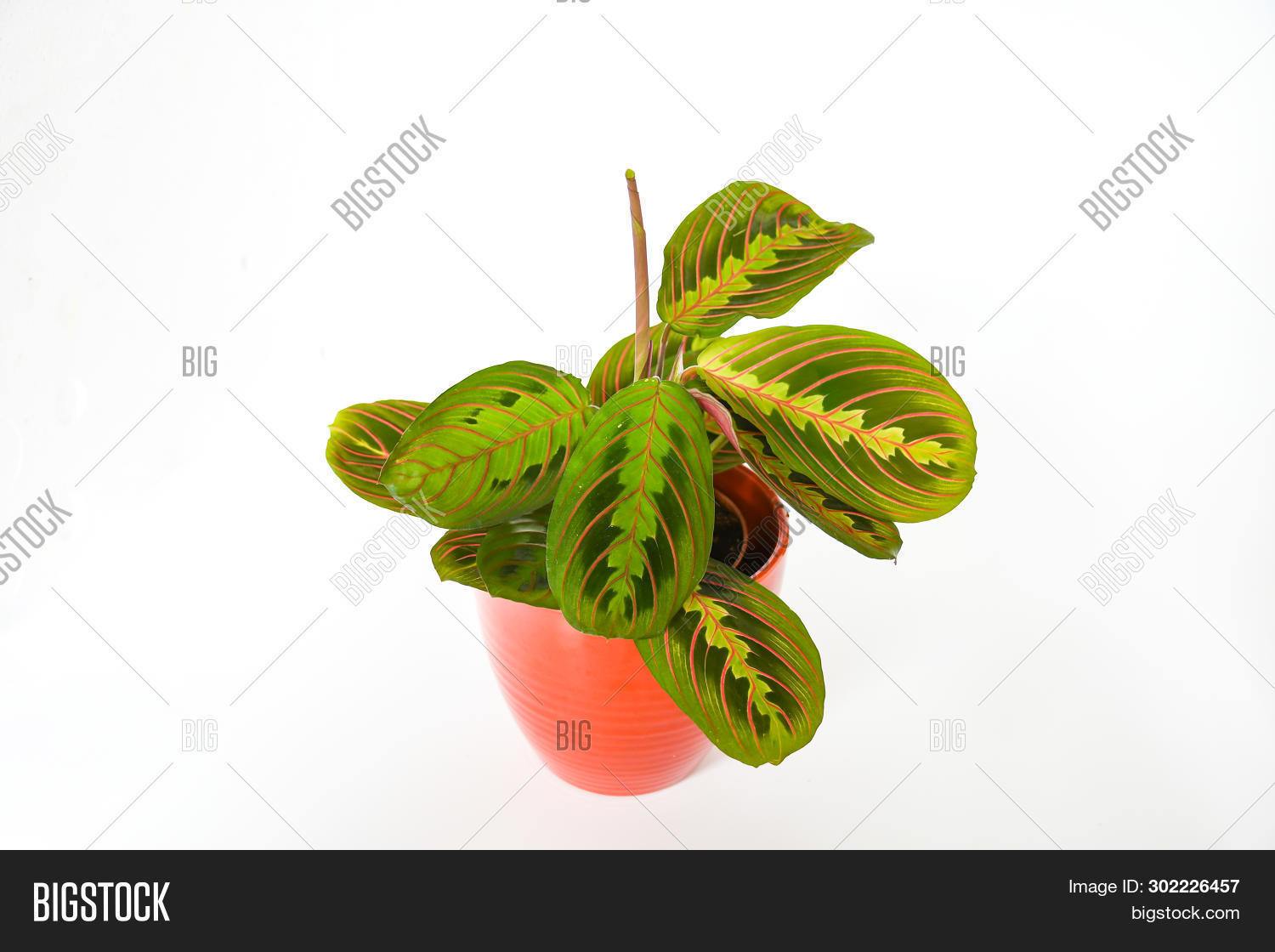 Beautiful Freshness Image Photo Free Trial Bigstock