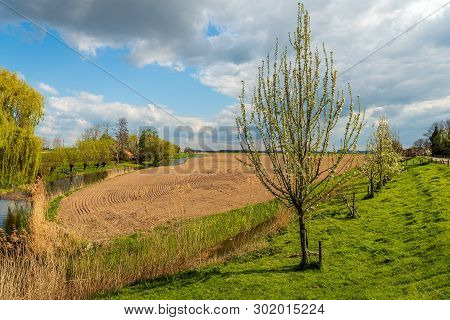 Picturesque Rural Dutch Landscape In Springtime. In The Foreground Is A Row Of Blossoming Apple Tree