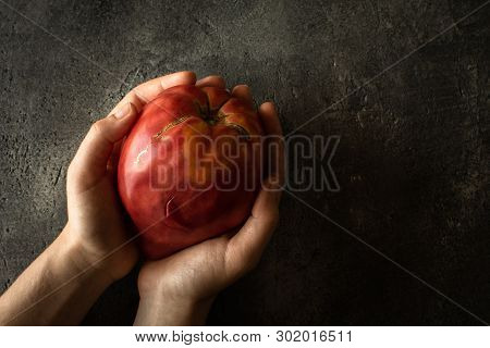 Organic Bull's Heart Heirloom Tomato In Female Hands. Superfood Healthy Eating Concept.