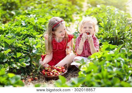 Kids Pick Strawberry On Berry Field In Summer