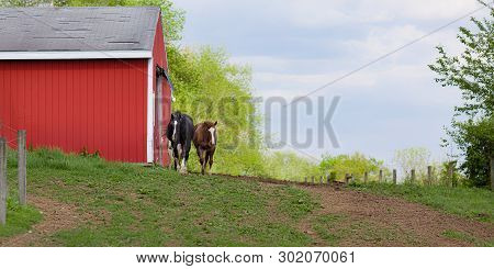 Scenic Rural Landscape Of Two Horses Approaching From Red Bard To Outside Fenced In Pasture During S