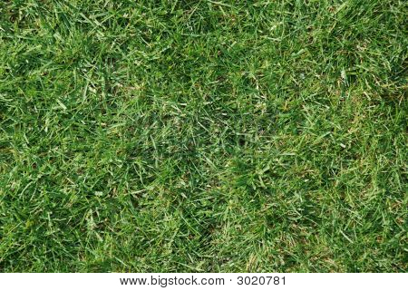 Close up of a grass football pitchooligans from above
