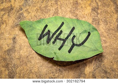 why question on a leaf shaped sticky note against handmade bark paper