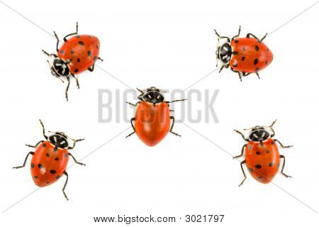 Ladybugs - Dare To Be Different