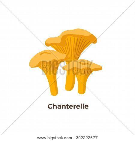 Chanterelle Mushrooms Isolated On White Background, Vector Illustration In Flat Design.