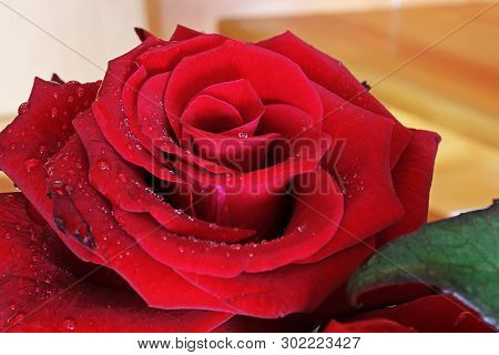 Beautiful Roses Close Up. Bouquet Of Red Roses