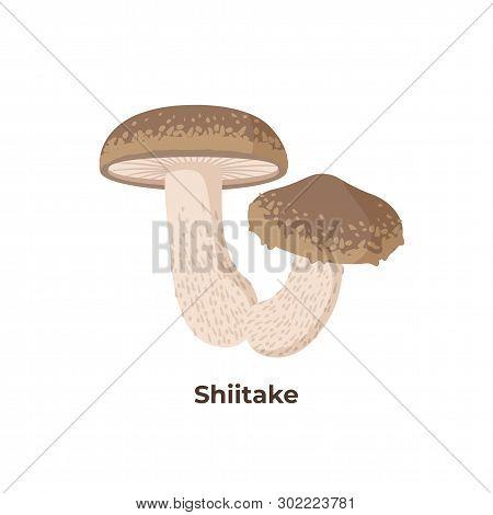 Shiitake Mushrooms Isolated On White Background, Vector Illustration In Flat Design.