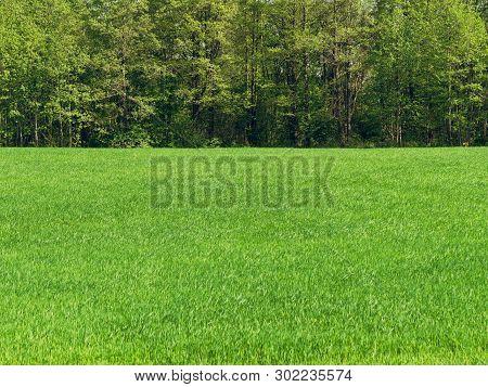 Green Meadow Field On Blue Sky Background