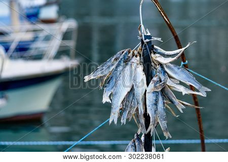 Bunch Of Small Dried Fish Hangs Outside