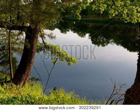 Tree By The River In The Evening On A Green Background