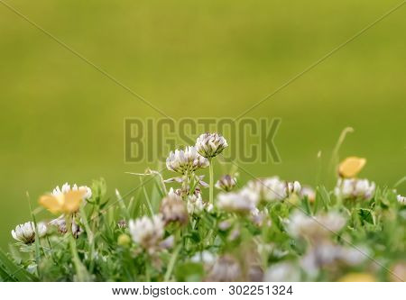 Nice Close-up With Field Flowers In Spring.