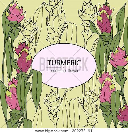 Background With Turmeric: Turmeric Flower And Leaves. Vector Illustration Hand Drawn With Place For