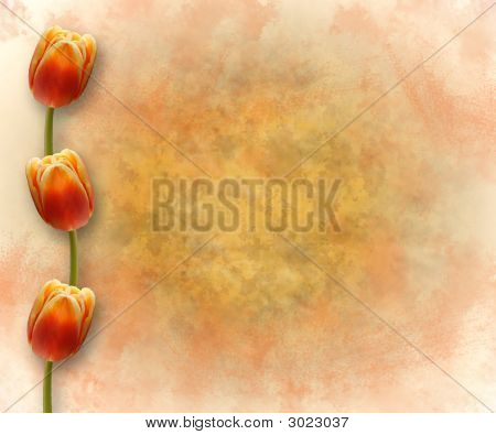 Tulips On Grunge  Background