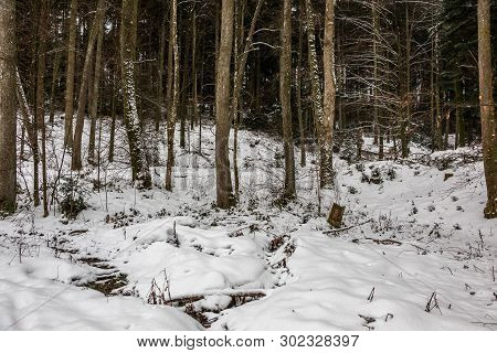 Winter Forest With Bare Leaves And White Snow