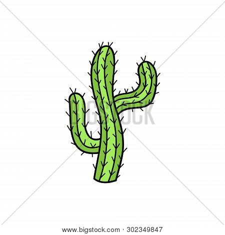 Cute Hand Drawn Cactus Vector Illustration. Green Mexican, Desert Cactus With Spines, Isolated.