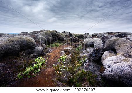 Exceptional Iceland landscape with lava field covered with brown moss Eldhraun from volcano eruption and cloudy sky