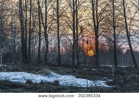 Large Orange Disc Of The Setting Sun In The Forest More Often.