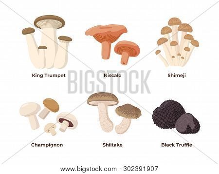 Mushrooms Set Of Vector Illustrations In Flat Design Isolated On White Background. King Oyster, Nisc