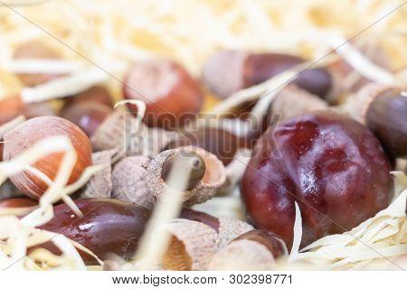 Harvest In Autumn, Nuts, Hazelnut, Acorn, Chestnut And Chestnut