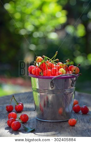 Ripe Sweet Cherry In Small Bucket On Wooden Table