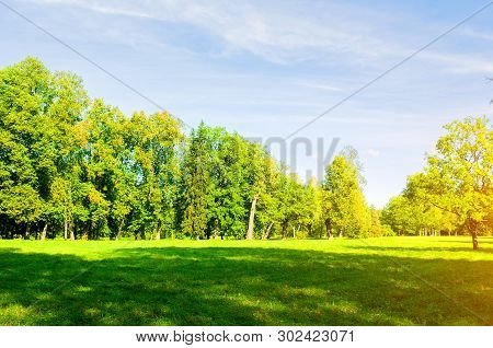 Summer forest landscape in sunny afternoon - forest trees growing in the park. Summer forest park nature in sunny day