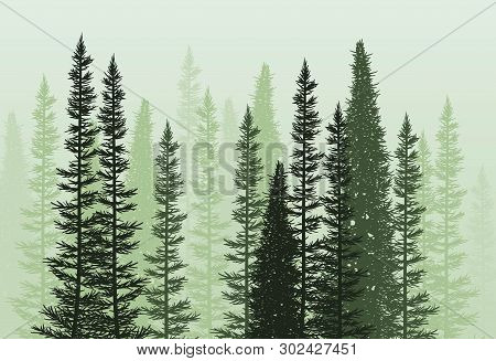Vector Forest Background. Green Spring Or Summer Woods, Nature Landscape With Evergreen Coniferous T