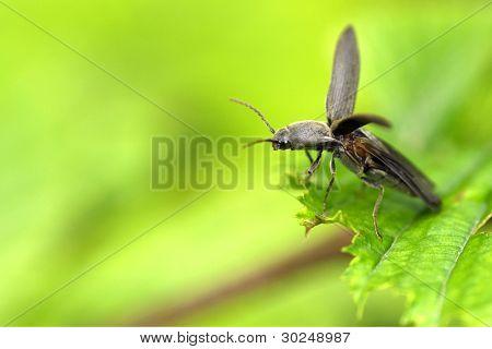 Takeoff a beetle