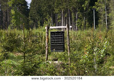 Pheromone Trap Against Ips Typographus In The Middle Spruce Forest.the European Spruce Bark Beetle I