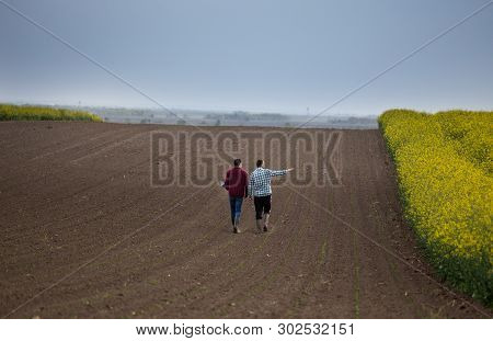 Rear View Of Two Farmers With Laptop Walking On Young Corn Beside Yellow Rapeseed